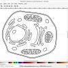 Obr. 6: Aplikace Inkscape s nakresleným modelem živočišné buňky