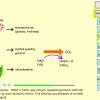 Obr. 4: Výuková animace Úvodní procesy v buňce